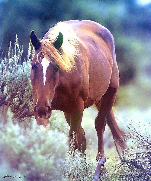 essay horse mustang