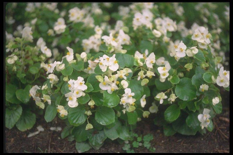 Покровные цветы с